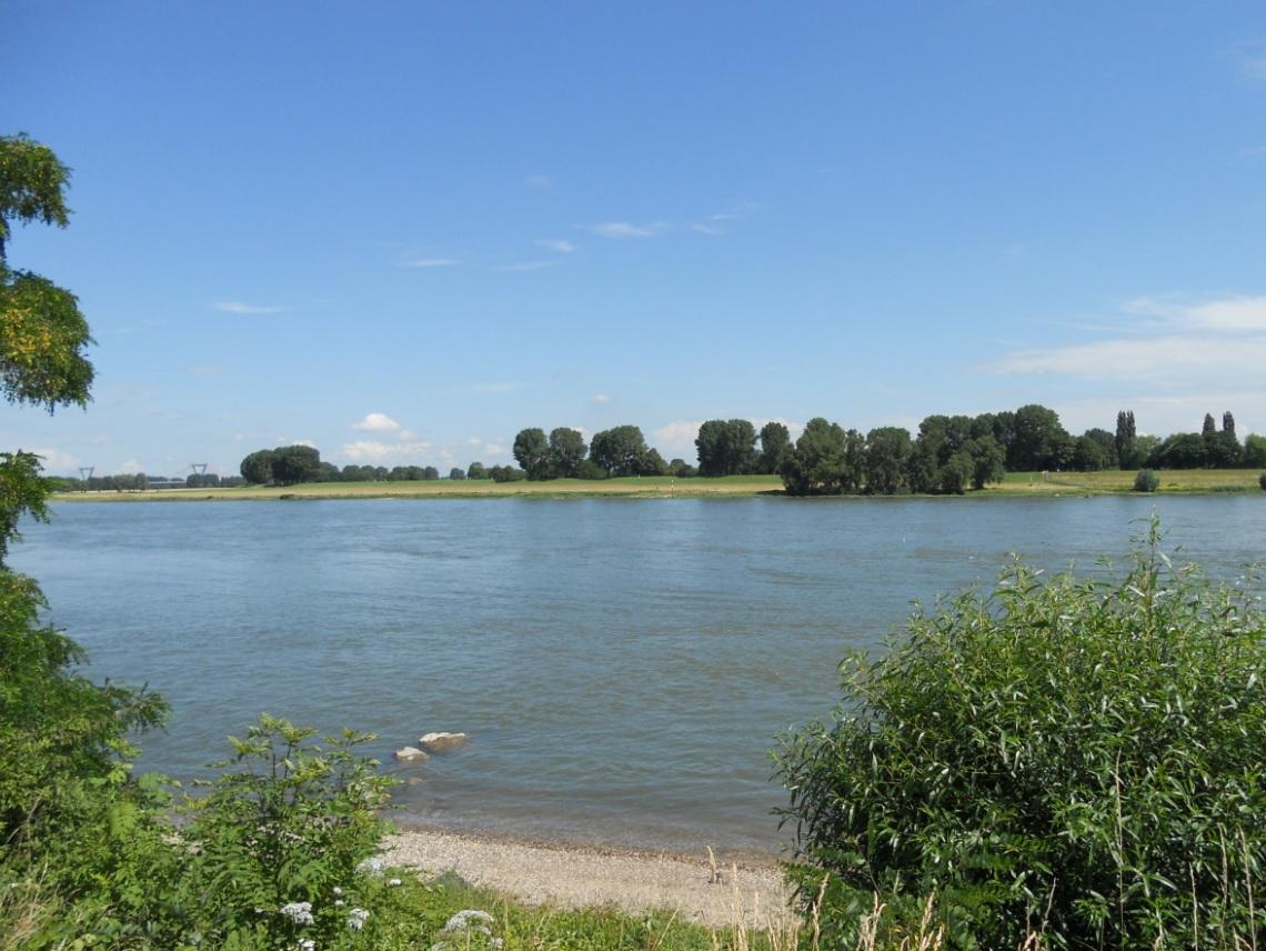 Natur am Rhein genießen