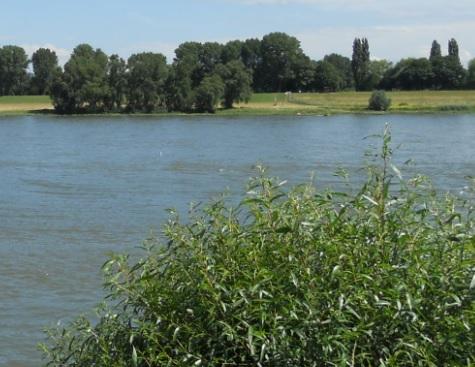 Natur und Rhein bei Wesel